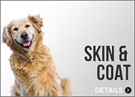 Dog Skin & Coat Supplements