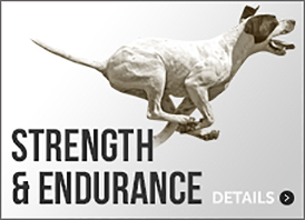 Dog Strength & Muscle Supplements